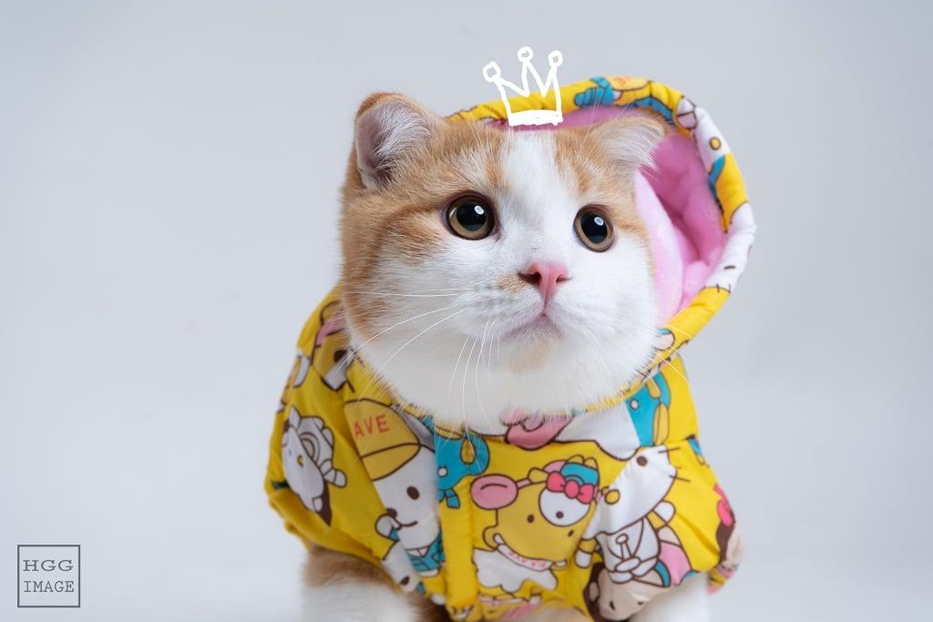 HGG IMAGE-台北桃園中壢新竹-寵物寫真-寵物-毛小孩-寵物寫真推薦